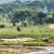 Afrika, Tansania, Tarangire, Giraffen in der Landschaft
