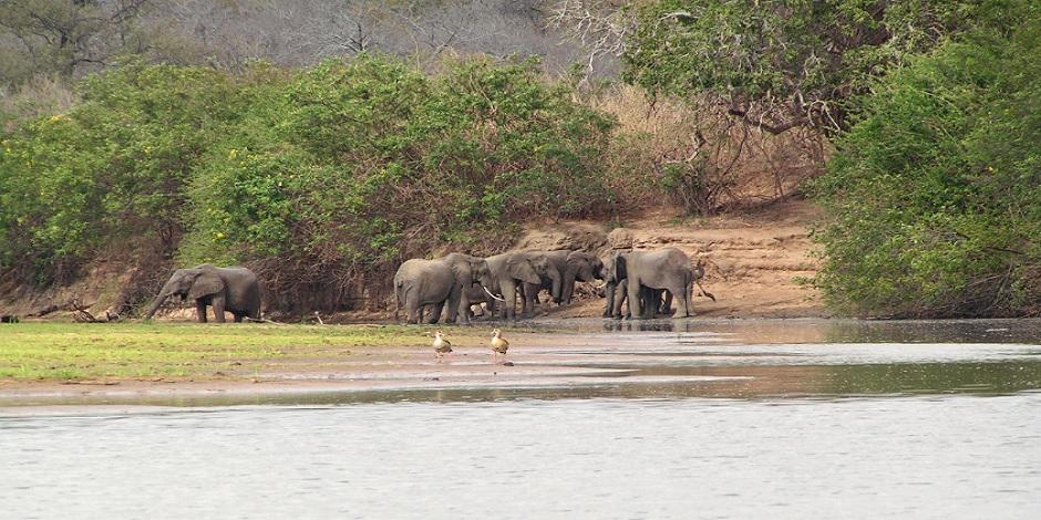 Les éléphants au bord du lac