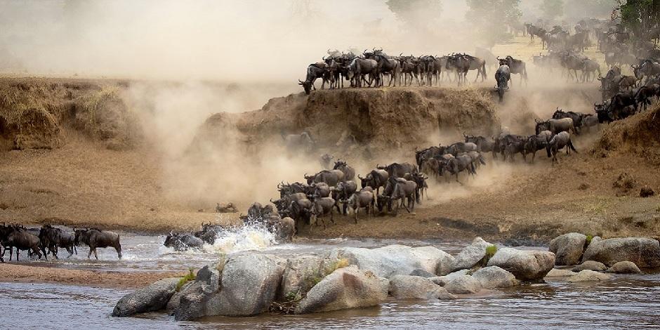 Migration de troupeau dans le parc