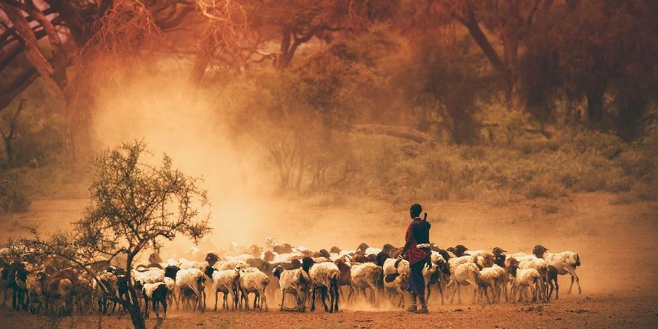 Nomade Avec Mouton En Tanzanie
