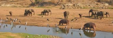 Les animaux du Parc National Ruaha